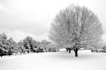 Bradford Pears in Winter