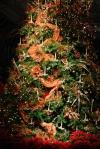 Christmas Tree at Lewis Ginter Botanical Garden