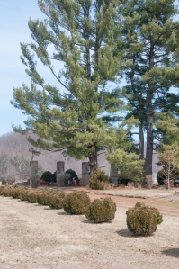 Pillars and Pine trees