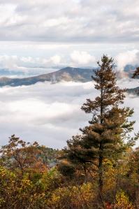 Tree and Big Fog